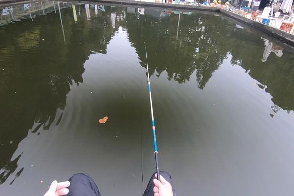 コイの釣り堀にエサを落として待つ